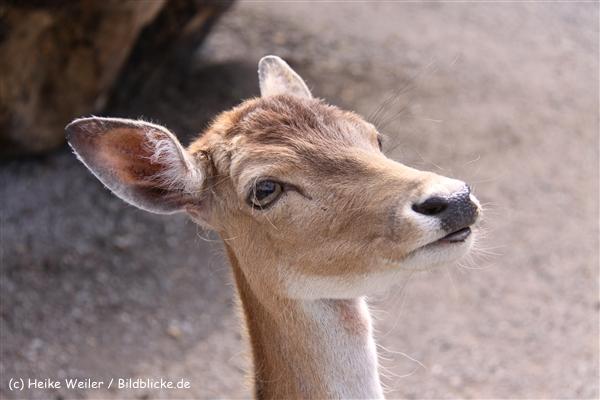 Tierpark Essehof 250610-IMG_5076