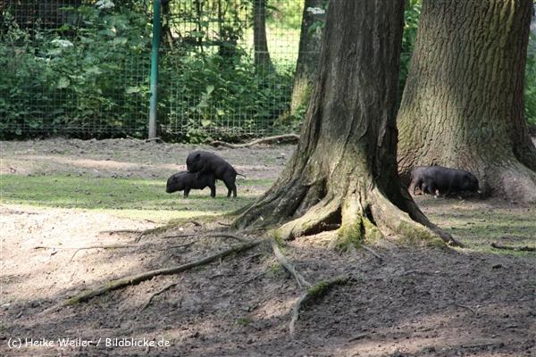 Tierpark Essehof 250610-IMG_5096