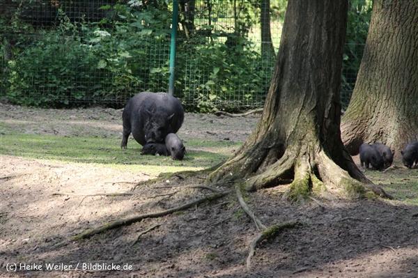 Tierpark Essehof 250610-IMG_5103