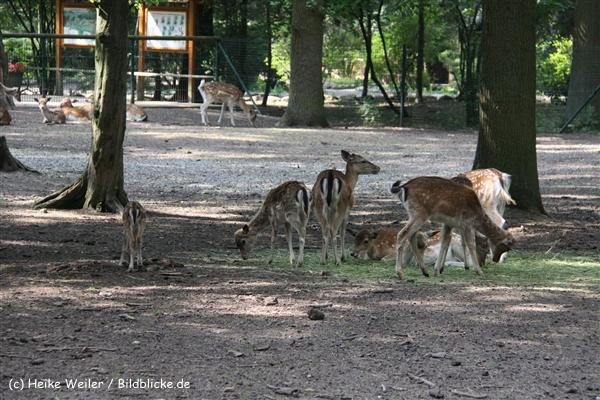 Tierpark Essehof 250610-IMG_5125
