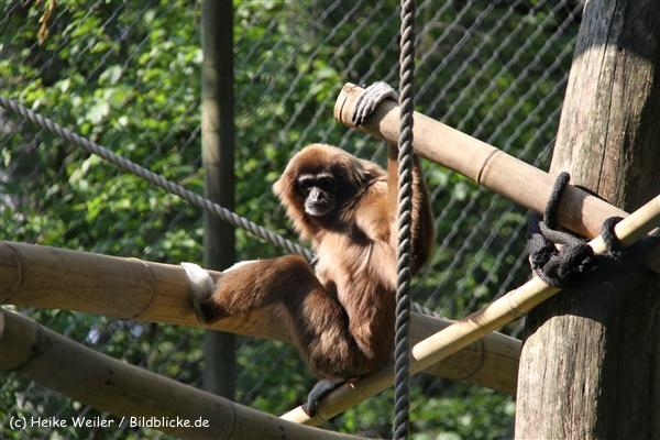 Tierpark Essehof 250610-IMG_5179