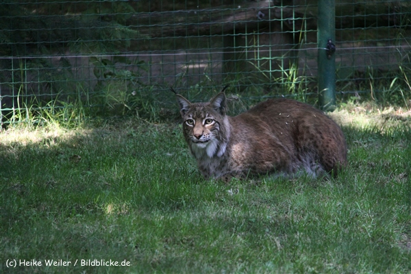 Tierpark Essehof 250610-IMG_5225