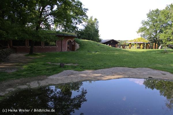 Tierpark Essehof 250610-IMG_5234