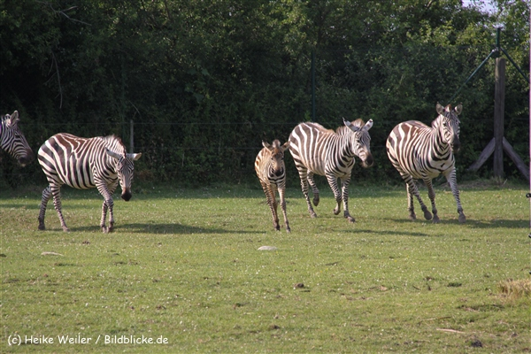 Tierpark Essehof 250610-IMG_5257
