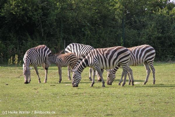 Tierpark Essehof 250610-IMG_5265