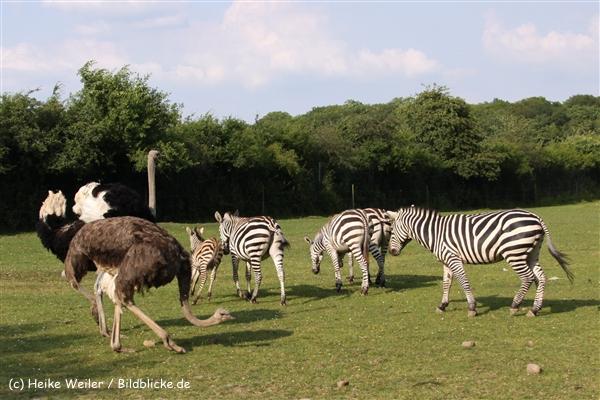 Tierpark Essehof 250610-IMG_5276