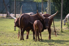 Tierpark Essehof 250610-IMG_5241