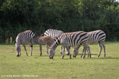 Tierpark Essehof 250610-IMG_5265