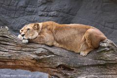 Tierpark_Hagenbeck_180516_IMG_4412