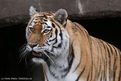 Tierpark_Hagenbeck_180516_IMG_4460a