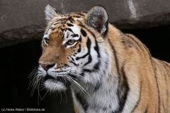 Tierpark_Hagenbeck_180516_IMG_4462a