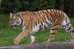 Tierpark_Hagenbeck_180516_IMG_4471