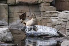 Tierpark_Hagenbeck_180516_IMG_4222