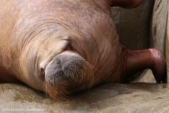 Tierpark_Hagenbeck_180516_IMG_4257a