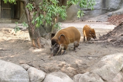 Tierpark_Hagenbeck_180516_IMG_4404