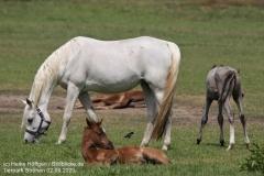 Tierpark_Stroehen_020620_IMG_0776