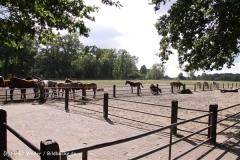 TierparkStroehen110909IMG_1086