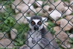 TierparkStroehen110909IMG_1095