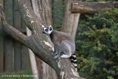 TierparkStroehen110909IMG_1099