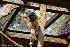 TierparkStroehen110909IMG_1158