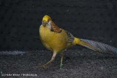 TierparkStroehen110909IMG_1192