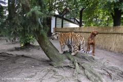 TierparkStroehen110909IMG_1201