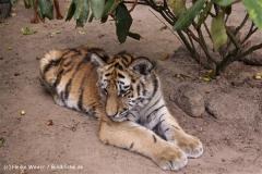 TierparkStroehen110909IMG_1253