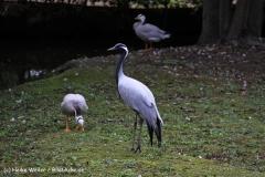 TierparkStroehen110909IMG_1347