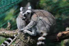 Tierpark_Stroehen_150515_IMG_3672