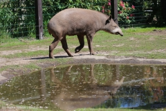 Tierpark_Stroehen_150515_IMG_3683