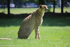 Tierpark_Stroehen_150515_IMG_3704