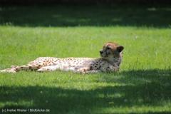 Tierpark_Stroehen_150515_IMG_3720
