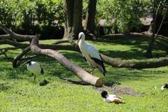 Tierpark_Stroehen_150515_IMG_3721