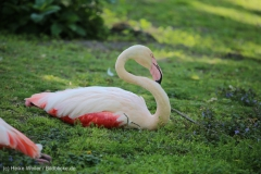 Tierpark_Stroehen_150515_IMG_3722