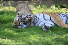 Tierpark_Stroehen_150515_IMG_3762