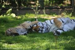 Tierpark_Stroehen_150515_IMG_3776