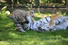 Tierpark_Stroehen_150515_IMG_3788
