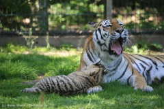 Tierpark_Stroehen_150515_IMG_3792