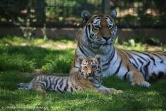 Tierpark_Stroehen_150515_IMG_3809