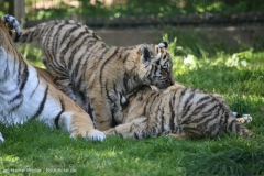 Tierpark_Stroehen_150515_IMG_3820