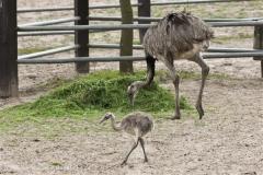 Tierpark_Stroehen_220814_copy_Heike_Weiler_IMG_5748