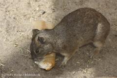 Tierpark_Stroehen_220814_copy_Heike_Weiler_IMG_5759