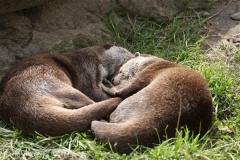 Tierpark_Stroehen_220814_copy_Heike_Weiler_IMG_5762