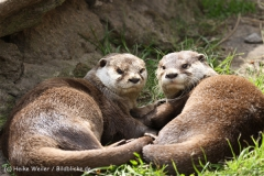 Tierpark_Stroehen_220814_copy_Heike_Weiler_IMG_5766