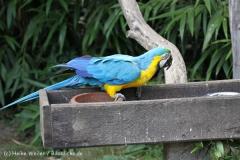 Tierpark_Stroehen_220814_copy_Heike_Weiler_IMG_5775