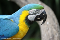 Tierpark_Stroehen_220814_copy_Heike_Weiler_IMG_5779