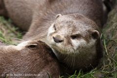 Tierpark_Stroehen_220814_copy_Heike_Weiler_IMG_5781