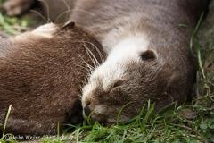 Tierpark_Stroehen_220814_copy_Heike_Weiler_IMG_5783