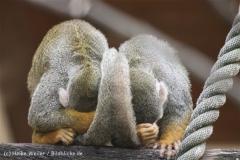 Tierpark_Stroehen_220814_copy_Heike_Weiler_IMG_5794
