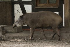 Tierpark_Stroehen_220814_copy_Heike_Weiler_IMG_5809